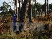 Vietnam aplica sistema de gestión de recursos forestales mediante tablets