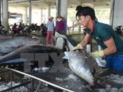 Vietnam invierte en reestructuración del sector acuícola