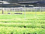 Vietnam y Países Bajos robustecen cooperación en agricultura