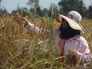 Tailandia: mayor exportador de productos alimentarios en ASEAN