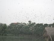 Islote de Cigüeñas, atracción turística en provincia centrovietnamita de Thanh Hoa
