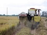 Exportaciones de arroz de Vietnam disminuyen en primer trimestre de 2017