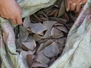 Decomisan lotes con escamas de pangolín en aeropuerto vietnamita