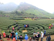 Celebran festival de té en provincia norvietnamita