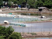 Proyecto de adaptación al cambio climático beneficia a provincia de Ben Tre