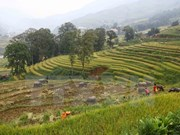 Inaugurarán Festival veraniego en pueblo vietnamita de Sapa