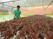 Japón estudia inversión en agricultura en provincia norvietnamita
