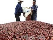 Empresa taiwanesa impulsa promoción de productos cafeteros en Vietnam