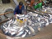 Vietnam ingresa más de dos mil millones de USD por venta de productos acuáticos