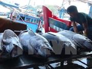 Vietnam y China impulsan desarrollo sostenible de pesca en golfo de Tonkín