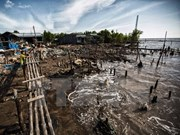 Provincia vietnamita pierde anualmente 450 hectáreas de tierra costera por erosión