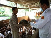 Piden a China levantar prohibición de importación de carne de cerdo de Vietnam