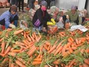 Vietnam registra gran aumento de exportaciones de verduras