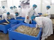 Conchas limpias vietnamitas penetren en mercado europeo