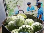 Frutas de Vietnam conquistan mercado internacional