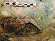 Descubren sarcófago antiguo de madera en Vietnam