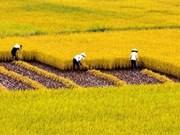 APEC 2017: Debaten en Vietnam desarrollo urbano- rural para fortalecer la seguridad alimentaria