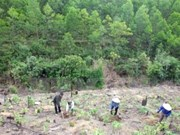 Vietnam se esfuerza por impulsar desarrollo sostenible de silvicultura