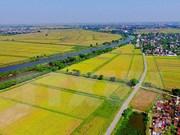 Vietnam se esfuerza para impulsar el desarrollo agrícola
