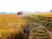 Hanoi reporta alto valor de producción agrícola