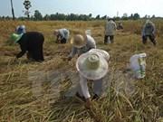 Sri Lanka y Bangladesh sellan gran contrato de compra de arroz de Tailandia