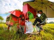 Empresas de Vietnam ganan licitación para vender arroz a Filipinas
