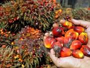 Indonesia registra baja producción de aceite de palma en junio