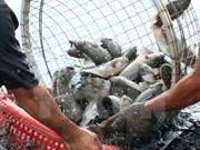 Evalúan en Vietnam las políticas de desarrollo de la acuicultura