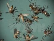 Ninh Binh refuerza medidas preventivas contra dengue