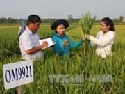 Agricultura de Vietnam con altas perspectivas para futuro desarrollo
