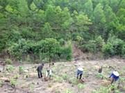 Provincias altiplánicas vietnamitas impulsan reforestación
