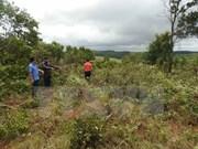 Política de entrega de tierras y bosques de Vietnam muestra alta eficiencia