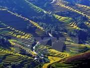 Festival cultural destacará belleza de terrazas de arroz de Vietnam