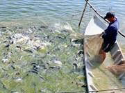 Vietnam lanza nuevo programa para monitorear pescados exportados a EE.UU.