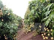 Provincia norvietnamita promueve inversiones en zonas agrícolas de alta tecnología