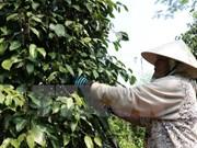 Más de 2,1 millones de agricultores vietnamitas reciben préstamos crediticios