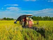 Vietnam propone soluciones para desarrollo del sector agrícola y seguridad alimentaria