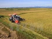 Exportaciones de arroz en Delta del río Mekong se recuperan