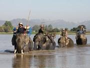 Deterioro de hábitat pone en jaque a elefantes en provincia vietnamita de Dak Lak