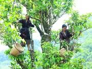 Vietnam elabora mecanismos más favorables para desarrollo de agricultura orgánica