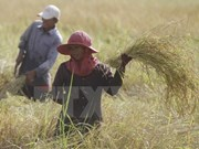 Myanmar venderá 300 mil toneladas de arroz a Bangladesh