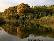 Parque Nacional de Chu Mom Ray, potencial destino turístico en Vietnam