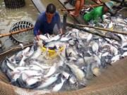 Reportan fuerte baja de exportaciones de pescado Tra vietnamita a Estados Unidos