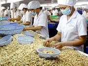 Exportaciones vietnamitas de anacardo reportan 2,2 mil millones de dólares en ocho meses de 2017
