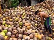 Indonesia ingresa 900 millones de dólares de exportaciones de coco