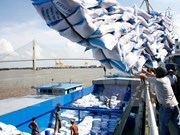 Enfoque en la calidad, línea directriz para la exportación arrocera de Vietnam