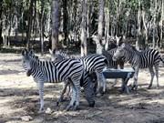 Provincia sudvietnamita de Dong Nai lanzará safari de vida silvestre