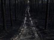 Vietnam expresa pésame a Portugal por incendios forestales