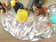 Efectúan en Vietnam concurso gastronómico de pescado Tra