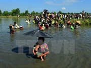 Myanmar otorga más de siete mil tarjetas de identidad en Rakhine